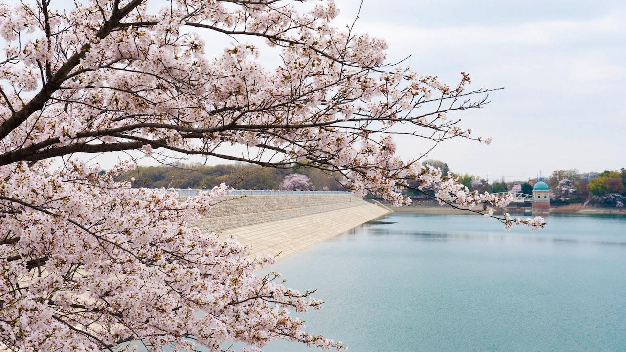 Sayama Park and Lake Tama 2