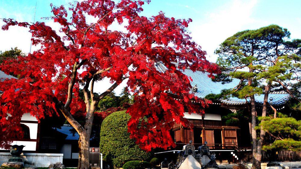 Nonin-ji-Temple-_02.jpg