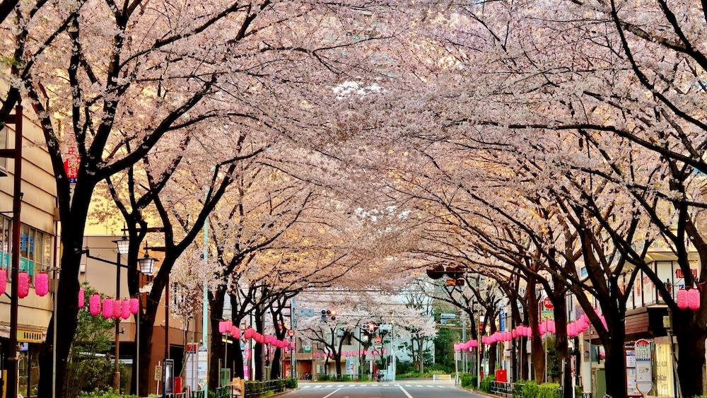 Araiyakushi-mae Station_2368348_m