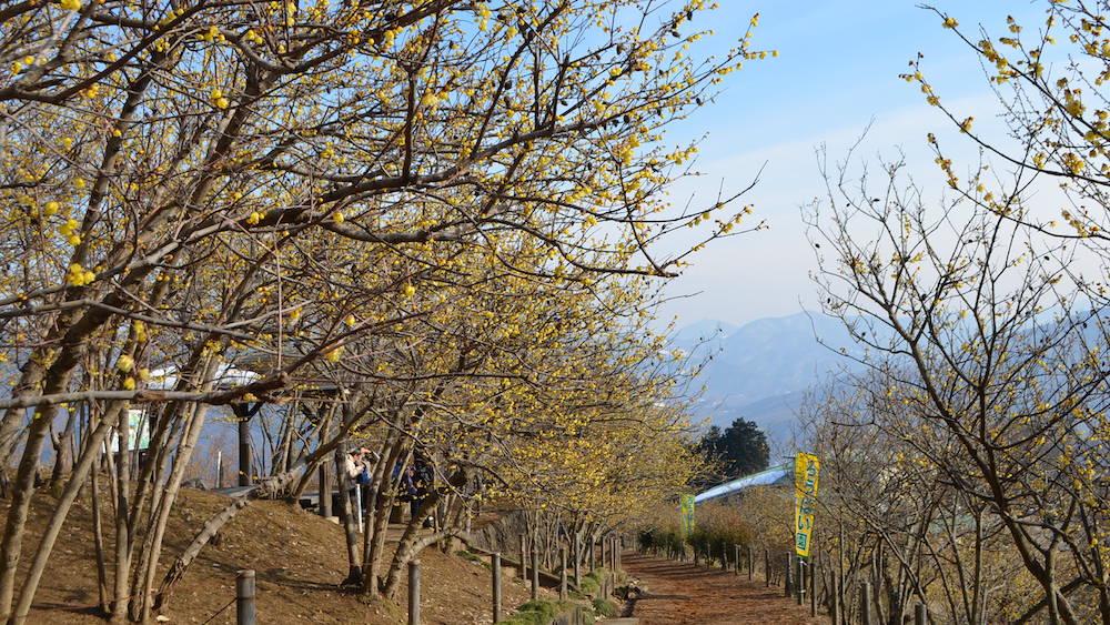 Mt. Hodo_1
