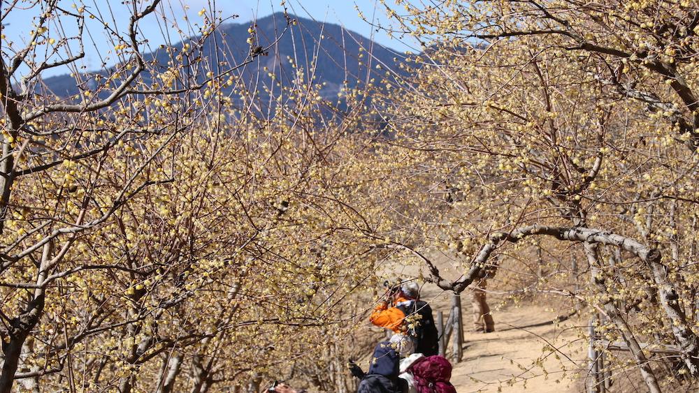 Mt. Hodo_2