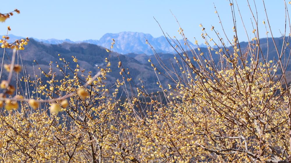 Mt. Hodo_3