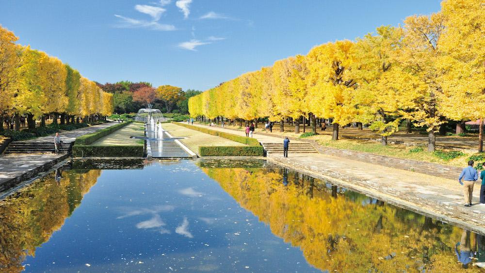 Showa Kinen Park1