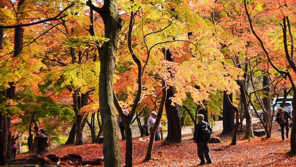Tsukinoishi Momiji Park1