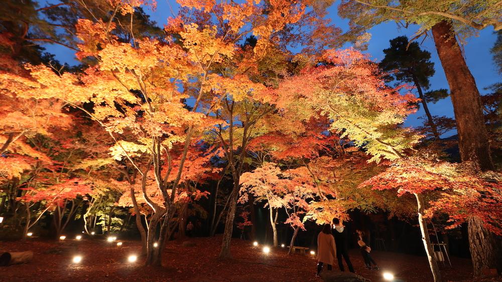 Tsukinoishi Momiji Park2