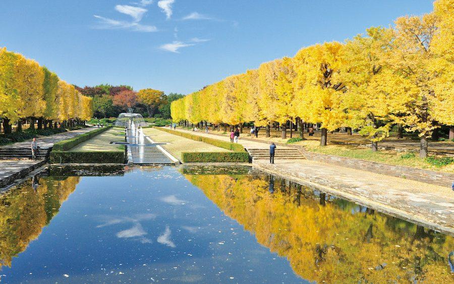 Showa-Kinen-Park1