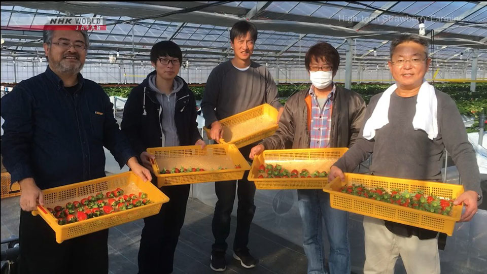 Iwasa teamed up with local strawberry farmers and provides training to others