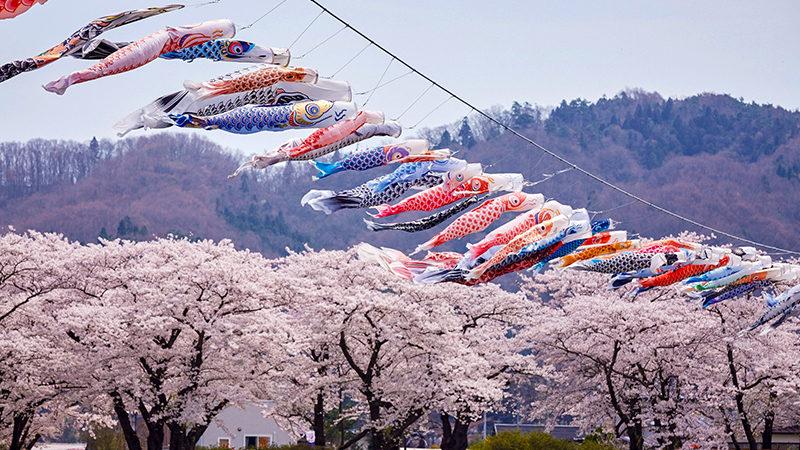 koinobori (carp streamers) flying over Kitakami River