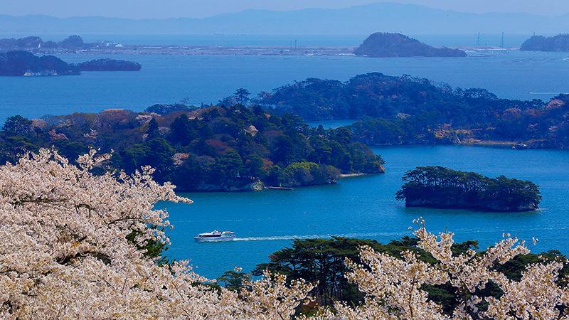 Saigyo Modoshi no Matsu Park sakura and Matsushima