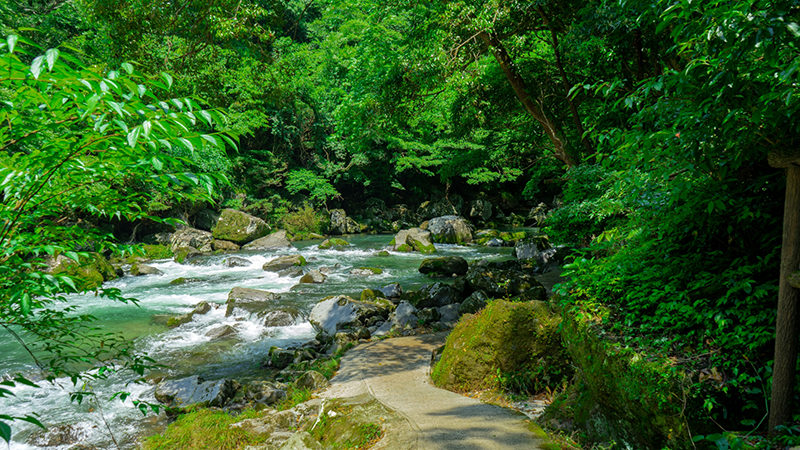 The walking path to Ogawa Waterfall, Kagoshima