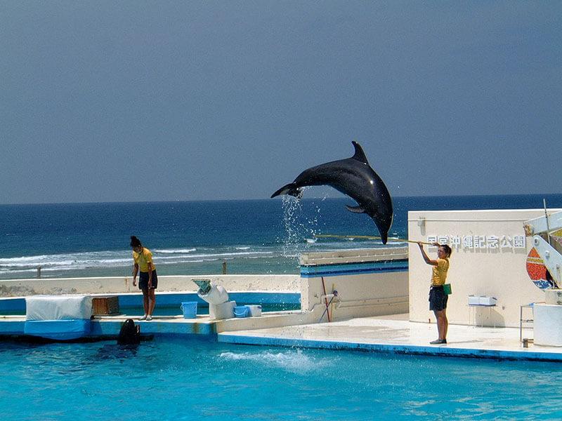 800px-Dolphin-jump