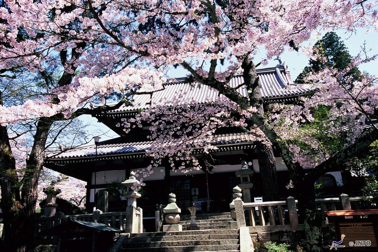 oasis onsen Home / travel / travel the world / 10 hidden gems you can  a spa oasis teeming with  reap the beautifying benefits of mineral-rich mud at beppu onsen.