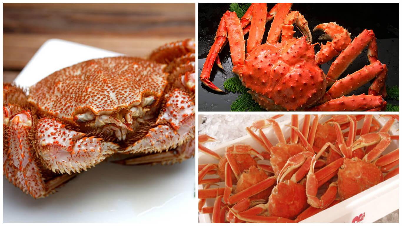 wattention a taste of sh旬n feeling crabby