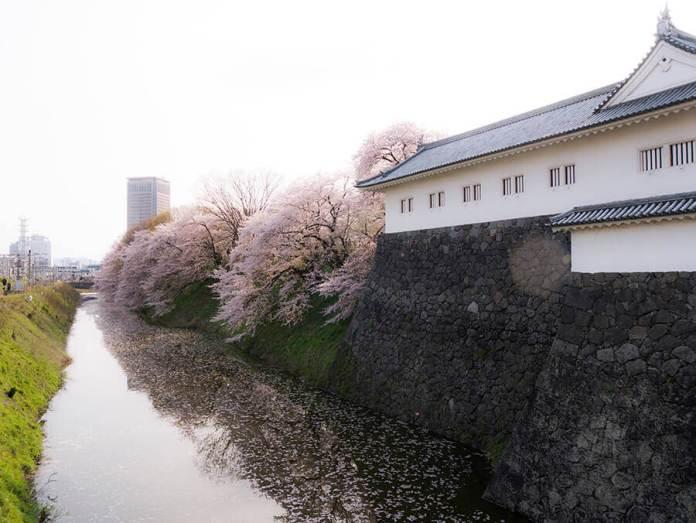Yamagata Castle Sakura Daytime