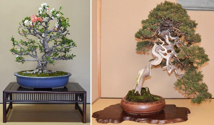 bonsai2a