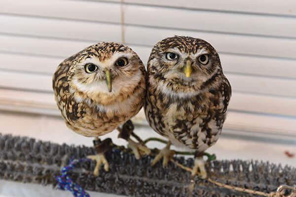 cute owls in ikebukuro owl cafe tokyo
