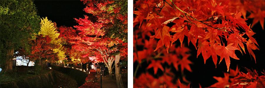 Kawaguchiko Autumn Leaves Festival is worth a visit