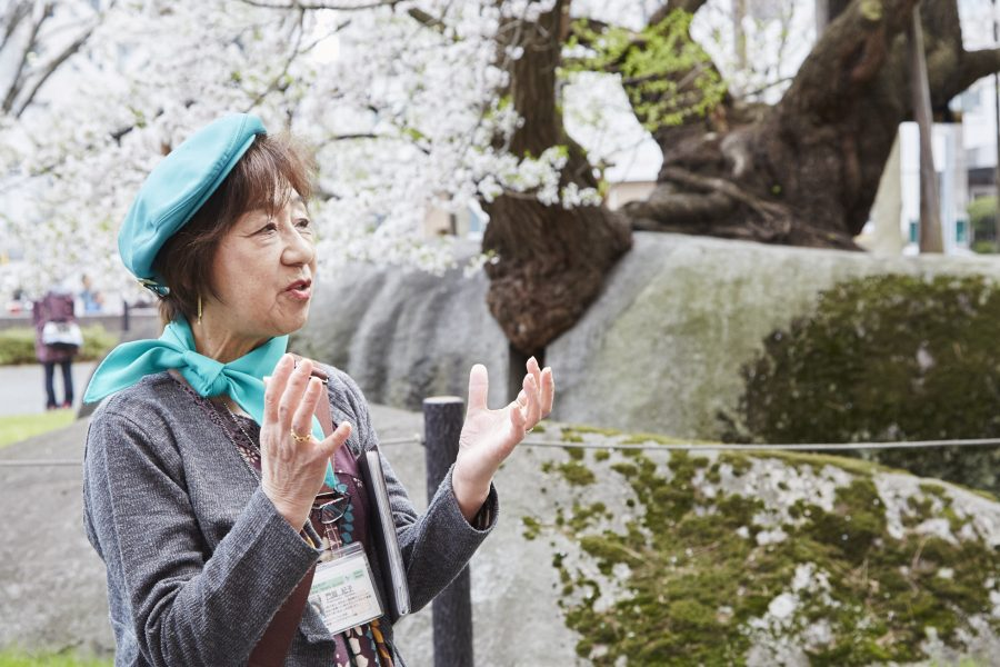 Morioka Sakura the rock breaking cherry tree - caretaker