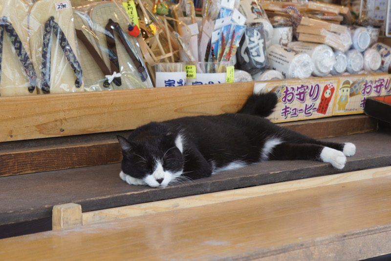 Japanese cat shitamachi shop