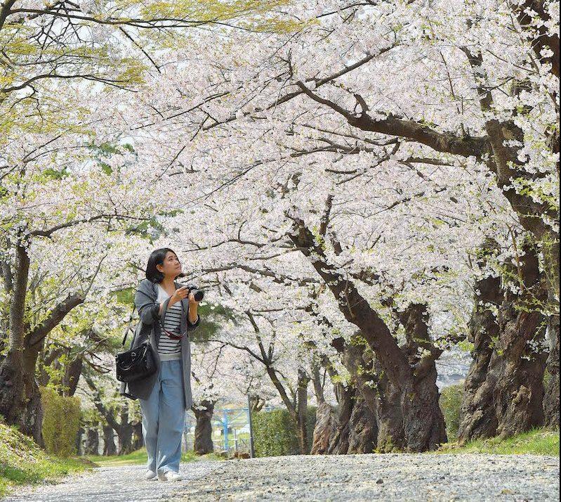 KAMINOYAMA_SAKURA3
