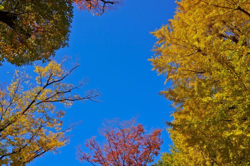 Suribachiyama Hill Ueno Park Autumn