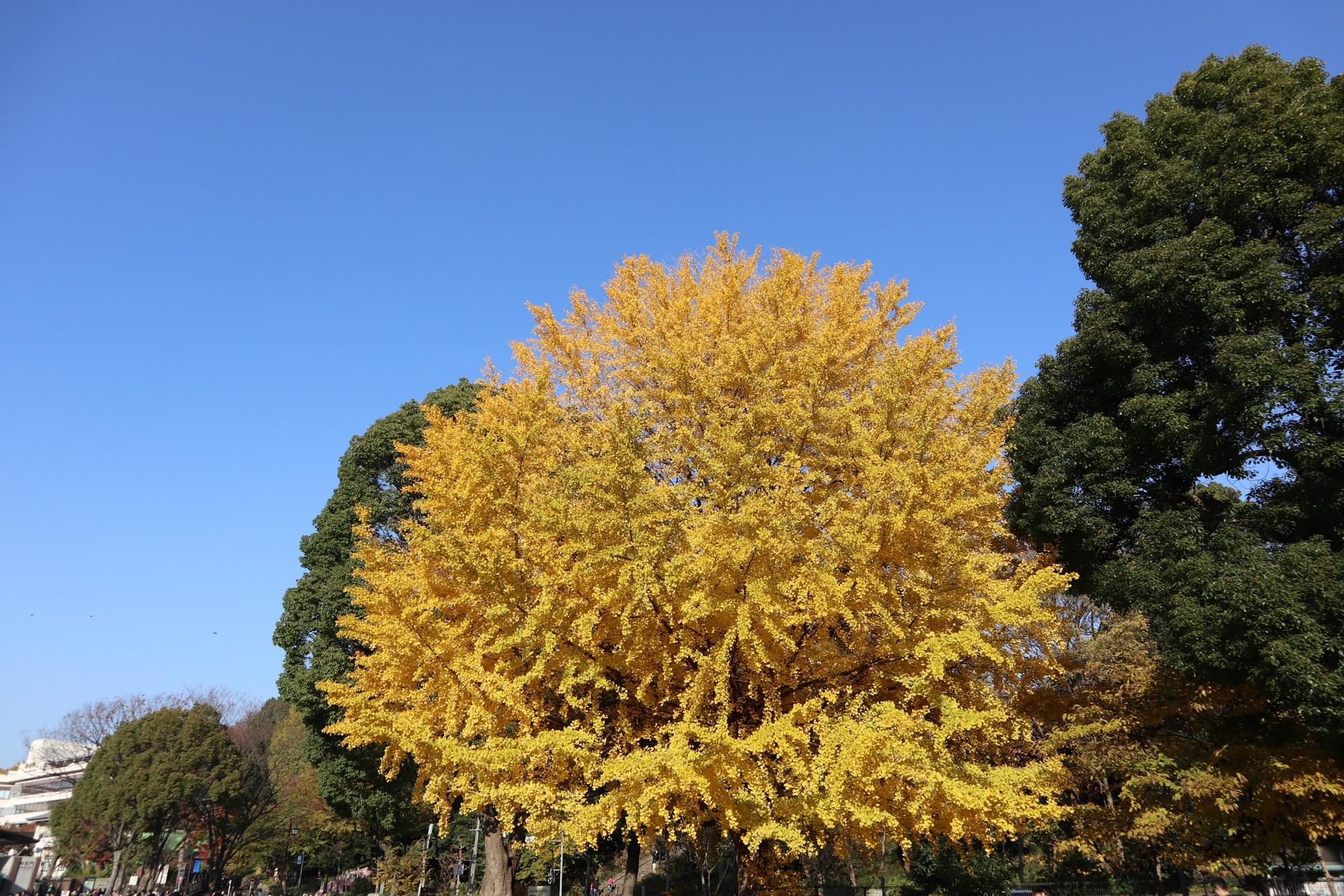 Ueno Park Autumn
