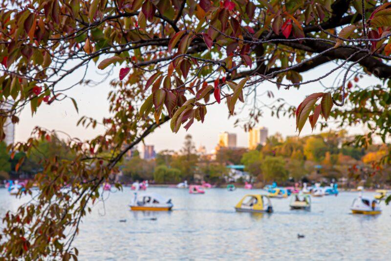 Ueno Park Autumn Pond Scenery