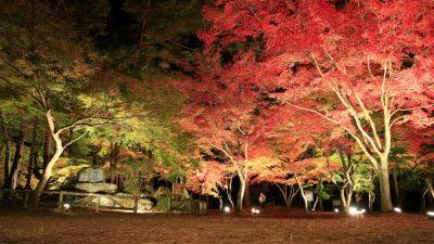 Maple Hunting In Saitama Nagatoro4